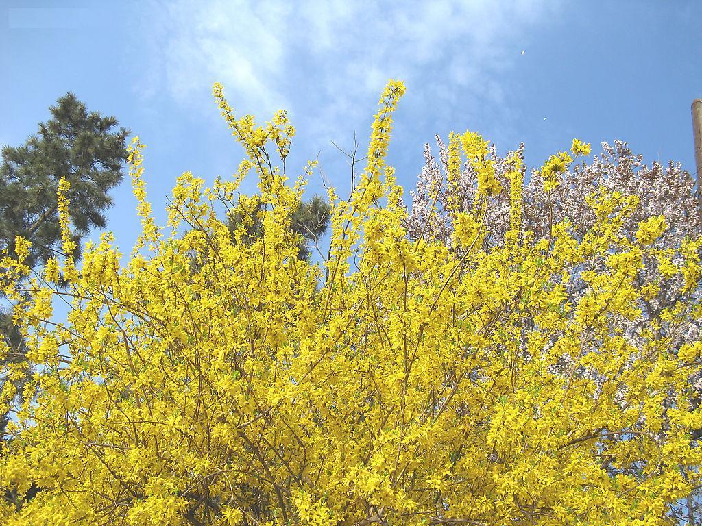 今日艺赏   城南的花又开了,风景依稀似去年