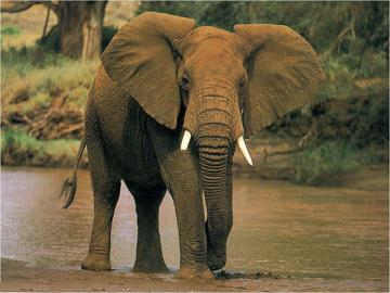 voices】保护野生动物