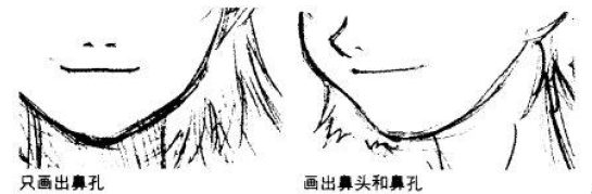 素描鼻子结构示意图