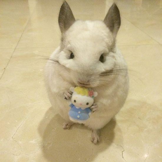 唯美小清新图片:懂得享受生活的小龙猫.